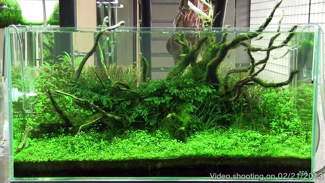 [ADA view 426] Follow-up video of NA Gallery aquariums.