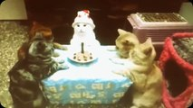 Top cats - Happy Birthday cats moment 2014