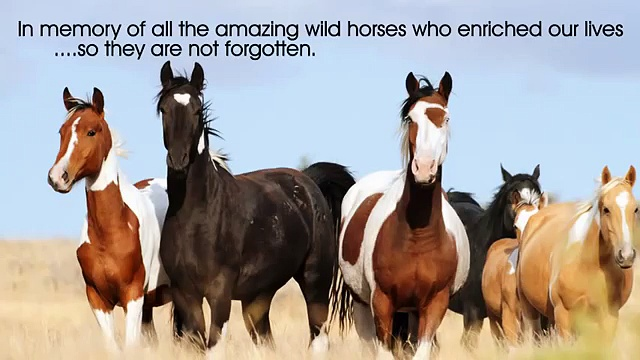 Trailer Wild Horses Understanding the Natural Lives of Horses