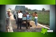 Mini Planta de Asfaltos Fija y Recicladora de Asfalto // www.greengoldcompany.cl