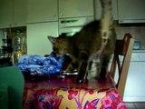 petit chat tres mignon