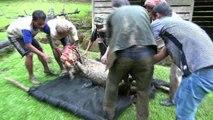 VIDEO: Sauvetage de cerfs sambars / Sambars deers rescue