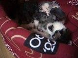 maman chat  donne la toilette à ses chatons