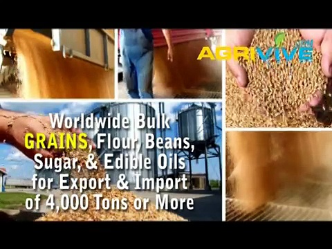 American Wholesale Grains Trading, Grains Trading, Grains Trading, Grains Trading, Grains Trading, Grains Trading, Grain