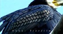 Kormoran Vogel des Jahres 2010 (Phalacrocorax carbo)