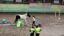 Jeux équestres et relais : nos parcours à pieds et à cheval, en liberté !
