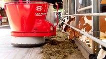 Lely Fütterungsroboter bei Ruedi Bigler Mooseedorf - Der Roboter kommt aus dem Bunker