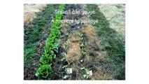 Formation MSV K Schreiber partie 8 Thèmes : Soltner : Jardiner sans bêcher. Comment travailler et semer avec un sol couvert ?