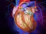 Valves cardiaques   définitions et mécanismes des valves cardiaques en vidéo santé 3D