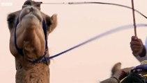 Wild Arabia - 1. Sand, Wind and Stars