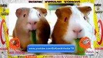 Komik Hayvanlar Seri 1 ( Komik Video )