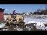 Illinois Horse Fair 2011 Extreme Cowboy Race Application Bianca Massa and Skippy