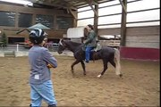 Training Gaited Horses - lessons with three different horses