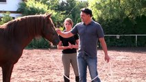 Lucero Consulting - Horse Assisted Coaching