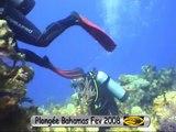 Plongée aux Bahamas Fev 2008