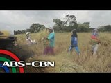 Scammed: How farmers are victimized by corruption