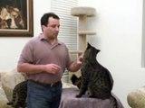 response: Savannah Rescue Serval/Cat- Big Cat TV
