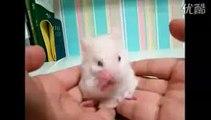 Cette petite souris se nettoie