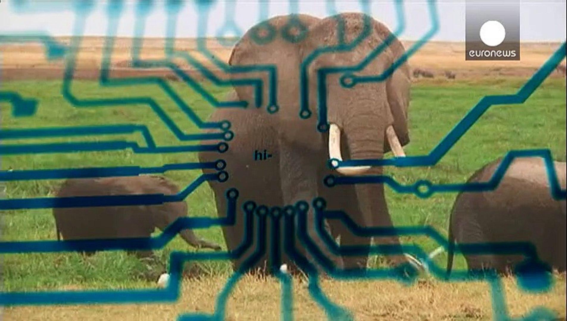تانزانیا ؛ روبات پرنده برای حفاظت فیلها از خطر