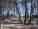 Peschici - 24 Luglio 2007