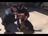 Lecce - Prende a calci il suo cane, studente denunciato (16.04.15)