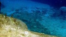 Swimming with Sea Turtles at Grand Cayman island Turtle Farm