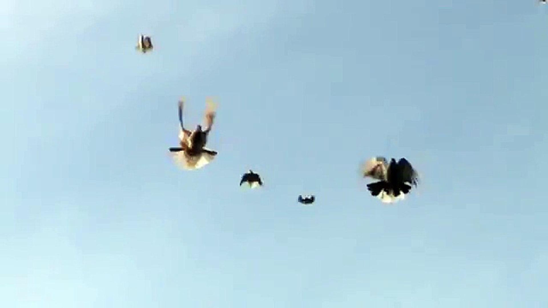 А я хочу, а я хочу опять по крышам бегать голубей гонять