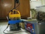 """Cute Persian kittens: """"G"""" & """"H"""" Litters' New Arrangements - 05.12.10"""
