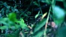 DESAFÍO X 2 - Discovery- LOS ANDES SUDAMERICA - Vídeo