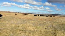 Century cattle roundup tradition continues Day 3 of Reservation Bottoms Roundup