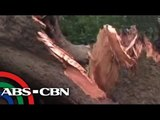 'Luis' topples trees, posts in Cagayan