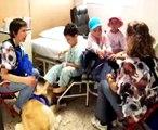 perros de terapia 2 laborando en unidad de oncologia