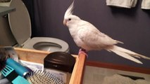 Bird sings and dances to 'Uptown Funk'