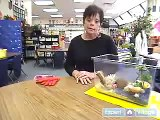 How to Care for Land Hermit Crabs   How to Handle Pet Hermit Crabs