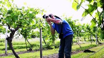 Behind the Scenes of the Finger Lakes Wine Country Travel Magazine Cover Photo Shoot