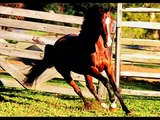 les belles et meilleur photos des chevaux sur internet ,cso cce dressage et tout