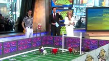 Puppy Bowl 2013 : Super Bowl 2013 Inspires Puppy Bowl: Sneak Peek at Doggie Football Event Very Cute