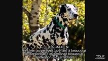 Les 10 races de chiens les plus populaires