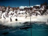 Penguin Encouter, SeaWorld San Diego