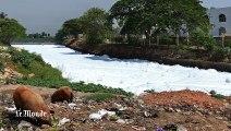 Inde - à Bangalore, un lac si pollué qu'il prend feu