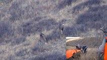 Mule Deer Buck Shot in Slow Motion. 338 Lapua