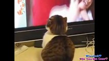 LOL Cats Fails Compilation / Chat Raté lol