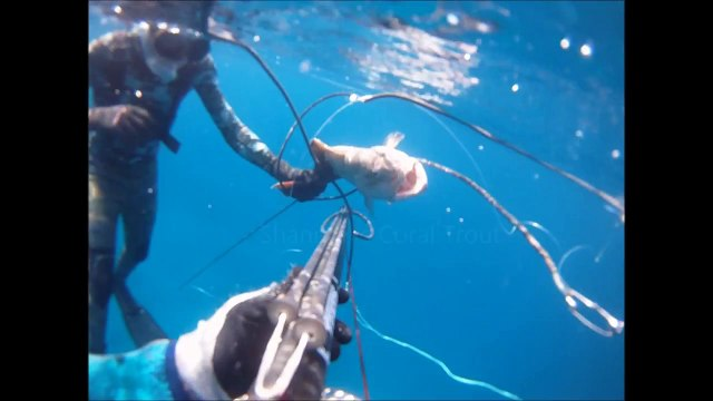 Spearfishing at Pellow Reef - Great Barrier Reef, QLD, Australia