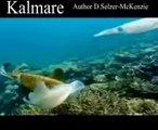 Kalmare Tiere Animals Natur SelMcKenzie Selzer-McKenzie