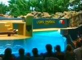 Loro Parque - well trained Seal show tricks- Seehund Vorführung