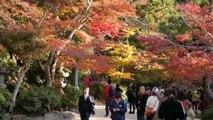 Japan Travel:  Walking with the Deer and Leaves on the Miyajima Walking Trails, Hiroshima 2015