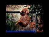 Funny Cats Fights   Cat Videos Funny 2014   Funny Cats Videos  Funny Animal Videos   funny video