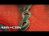 PH on heightened alert vs Ebola virus