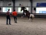 Gert van den Hof demo, eerste paard
