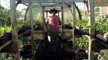 Growing Seedlings from Home-saved Seeds